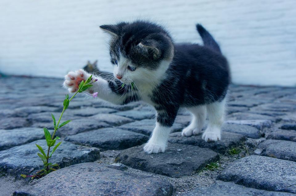 gatito jugando con flor
