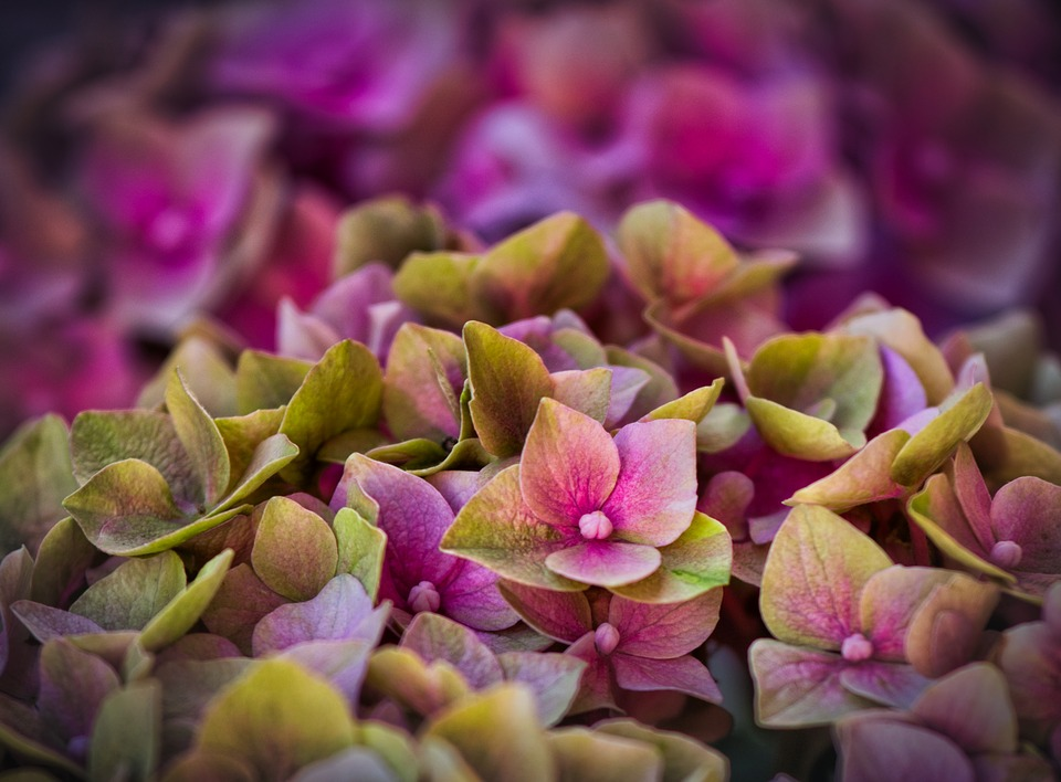 flores moradas en primavera