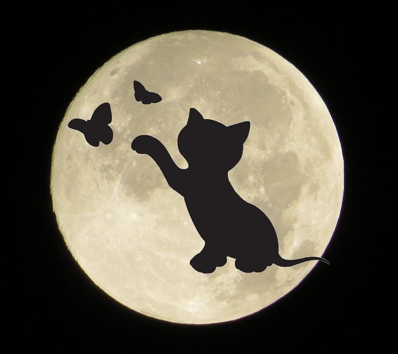 luna llena con silueta de gato y mariposas