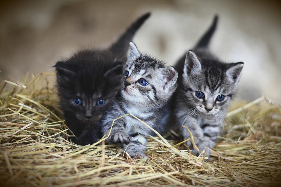 gatitos sobre paja