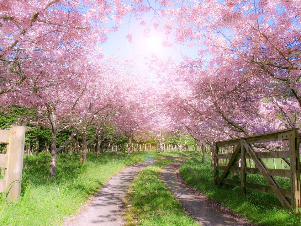 granja, verja en primavera