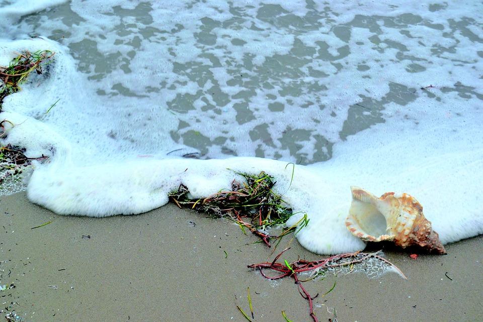 orilla playa y caracola