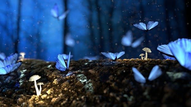 magia mariposas