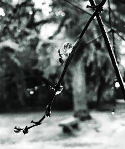 FOTOGRAFIA SECCIÓN