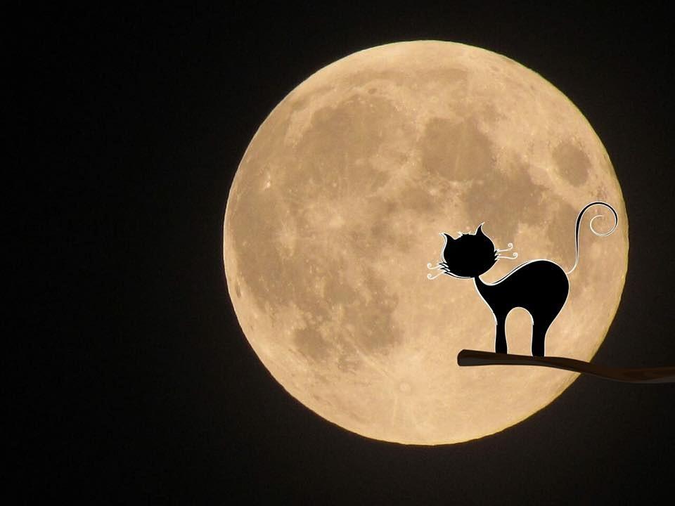 luna llena y gato