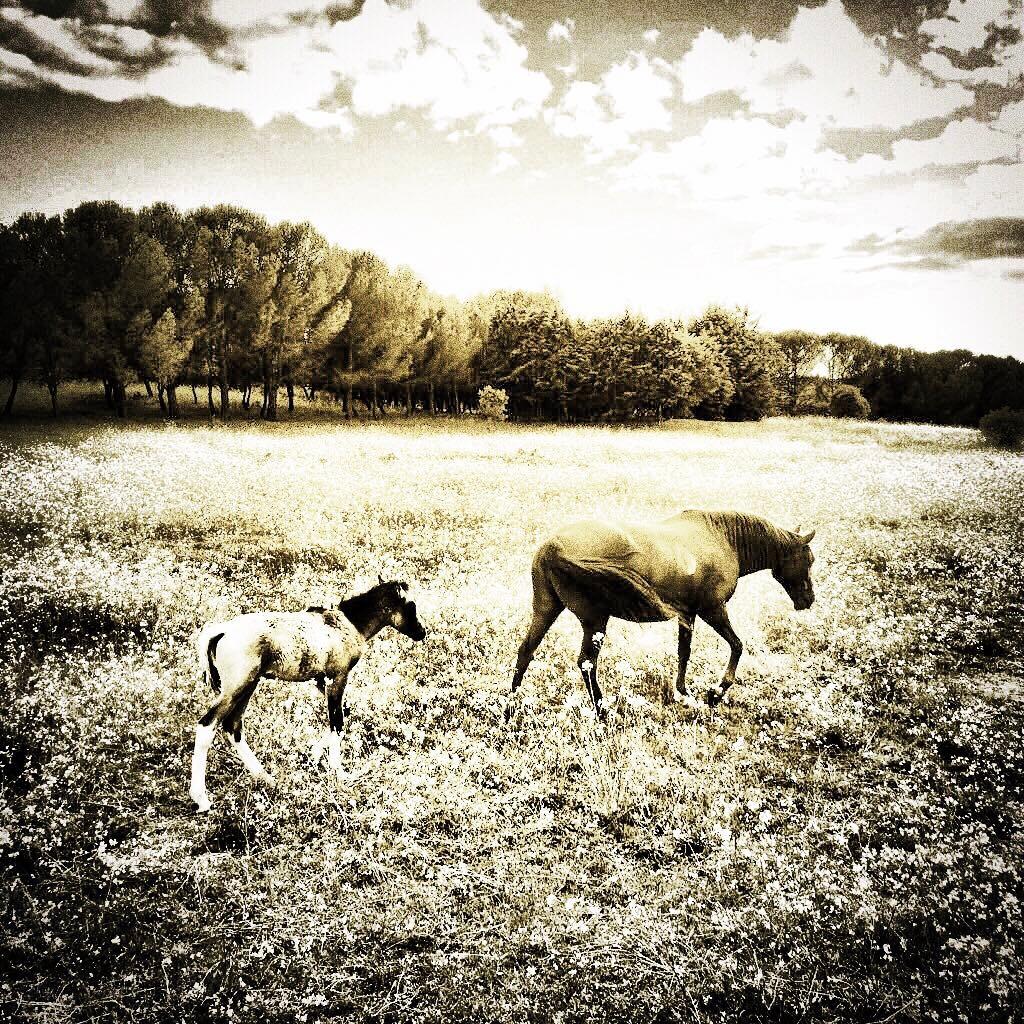 cielo y prado con caballos