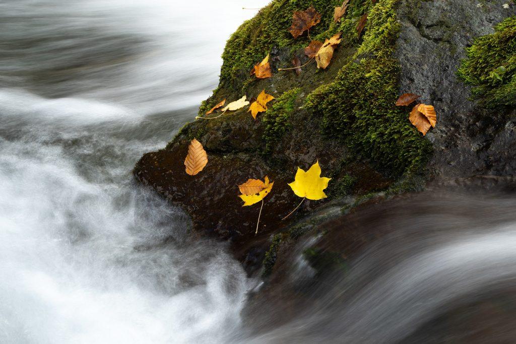 hojas roca