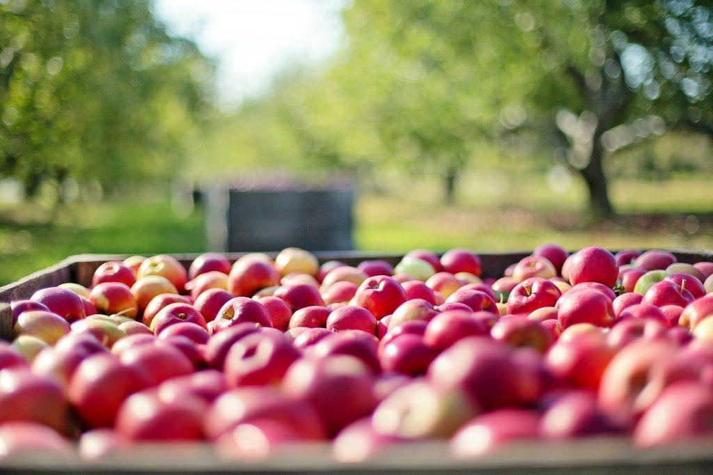 frutales y manzanas