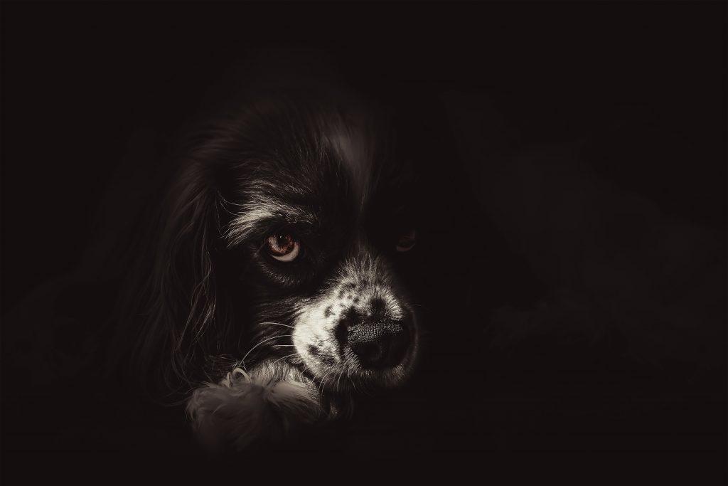 perrito negro