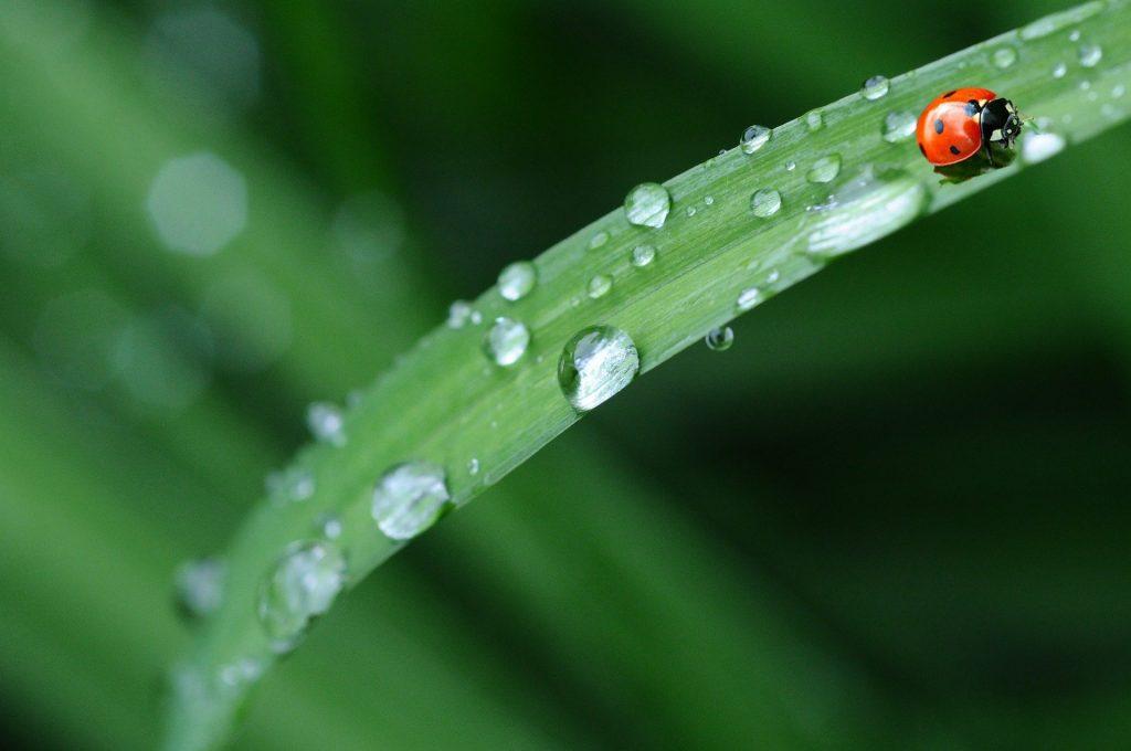 lluvia hoja mariqita